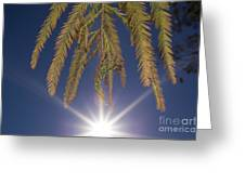 Autumn Coniferous Greeting Card