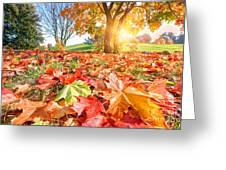 Autumn Fall Landscape In Park Greeting Card