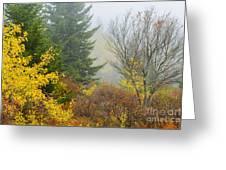 Autumn Fog Dolly Sods Greeting Card