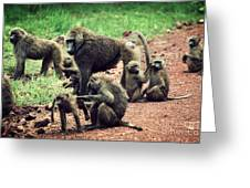 Baboons In African Bush Greeting Card