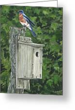 Backyard Bluebird 2 Greeting Card