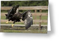 Bald Eagle In Flight Photo Greeting Card