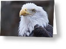 Bald-eagle-profile Greeting Card