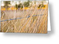 Barb Wire Country Fence Greeting Card