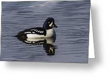 Barrows Goldeneye Greeting Card