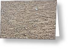Beach Detail Greeting Card