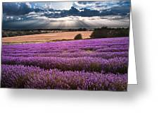 Beautiful Lavender Field Landscape With Dramatic Sky Greeting Card