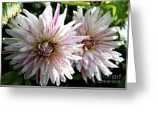 Beautiful Twins Greeting Card