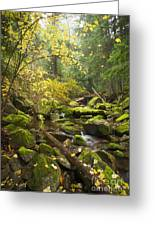 Beauty Creek Greeting Card