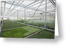 Bedding Plant Production Greeting Card