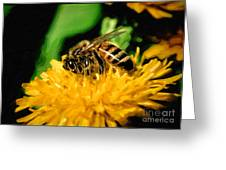 2 Bee Or Not 2 Bee Greeting Card