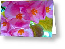 Begonia Debut Greeting Card