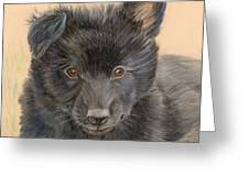 Belgian Sheepdog Puppy Greeting Card