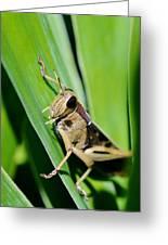 Big Grass Hopper Greeting Card