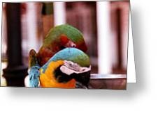 2 Birds Greeting Card