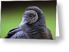 Black Vulture Portrait Greeting Card
