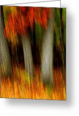 Blazing In The Woods Greeting Card
