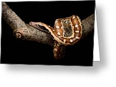 Blood Python Python Brongersmai Greeting Card