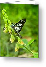 Blue Butterflies In The Green Garden Greeting Card