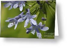 Blue Heaven Greeting Card