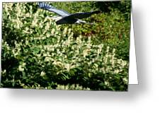 Blue Heron Flight  Greeting Card