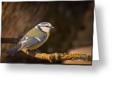 Blue Tit Greeting Card by Sylvia  Niklasson