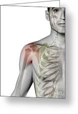 Bones Of The Shoulder Greeting Card