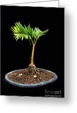 Bonsai Palm Tree Greeting Card