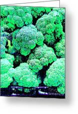 Broccolo Greeting Card
