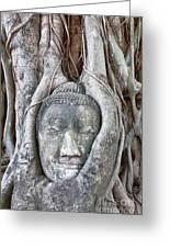 Buddha Head In Tree Greeting Card