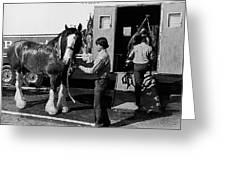 Budweiser Clydesdales La Fiesta De Los Vaqueros Rodeo Parade Tucson Arizona 1984 Greeting Card