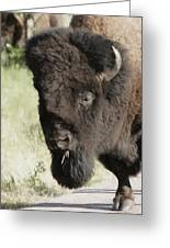 Buffalo Painterly Greeting Card