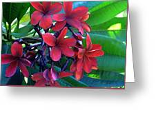 Burgundy Plumeria Greeting Card