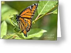 Busy Butterfly Greeting Card