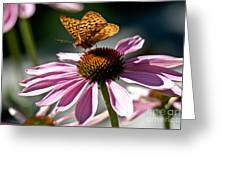 Butterfly Beauty Greeting Card