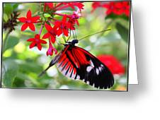 Butterfly On Red Bush Greeting Card