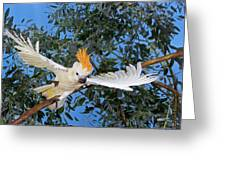 Cacatoes A Huppe Orange Cacatua Greeting Card