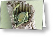 Caddisfly Larva, Sem Greeting Card