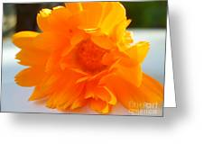 Calendula Greeting Card