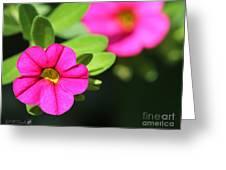 Calibrachoa Named Colorburst Rose Greeting Card