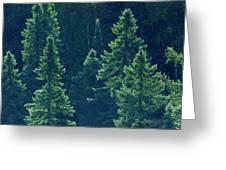 Canada, Ontario Algonquin Provincial Greeting Card