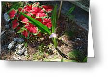 Canna Lily Greeting Card