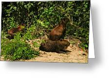 Capybara Greeting Card