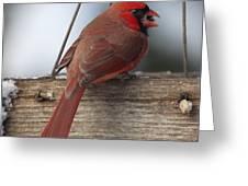 Cardinal Greeting Card by John Kunze