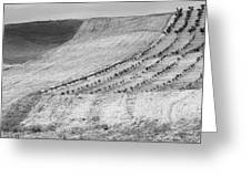 Cereal Fields Greeting Card