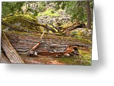 Cheakamus Rainforest Debris Greeting Card