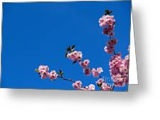 Cherry Blossom Against Blue Sky Greeting Card
