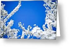 Cherry Blossom With Blue Sky Greeting Card by Raimond Klavins