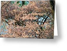 Cherry Blossoms In Pink And Brown Greeting Card
