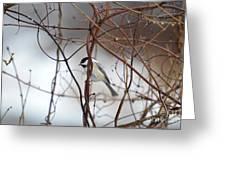 Chickadee On Woodvine Greeting Card